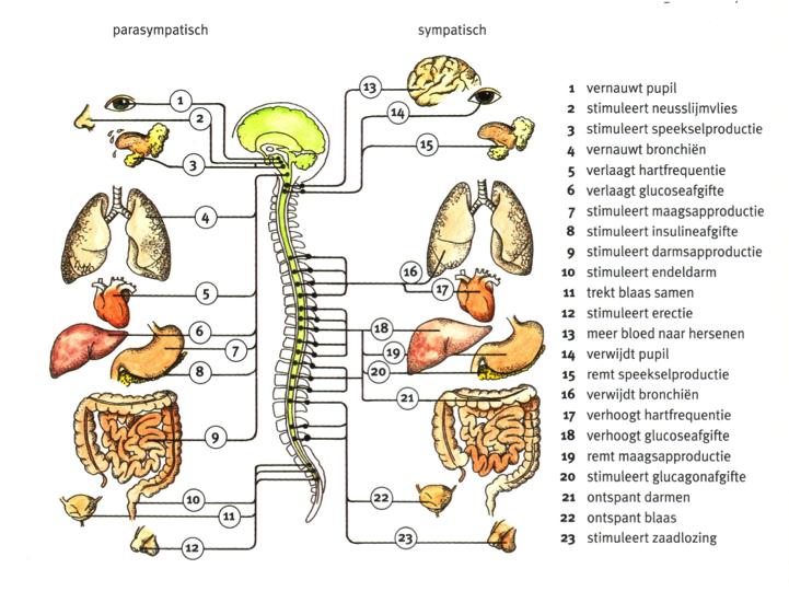 osteopathie balk osteopathie stress